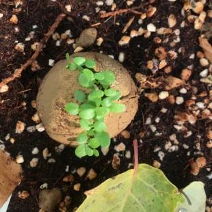 بسته باغبانی بمب بذر