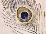 کتاب طاووس