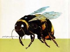 کتاب حشرات