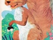 کتاب سنجاب کوچک