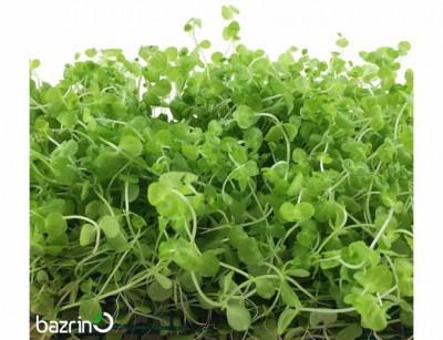 بذر چمن مونت کارلو