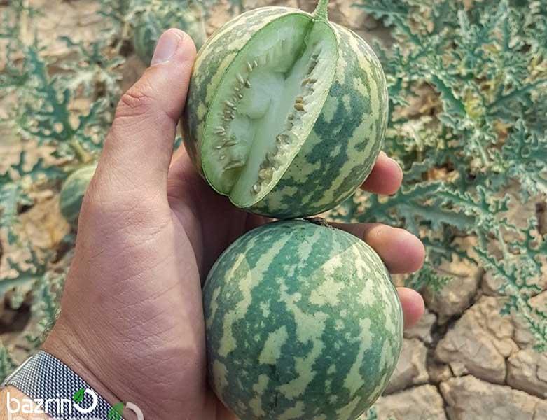 بذر هندوانه ابوجهل