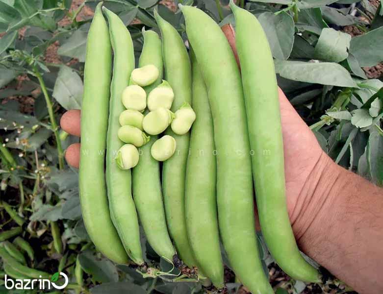 بذر باقلا هفت بند (100 گرمی)