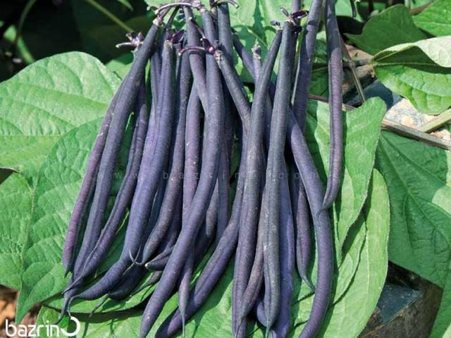 بذر لوبیا سیاه