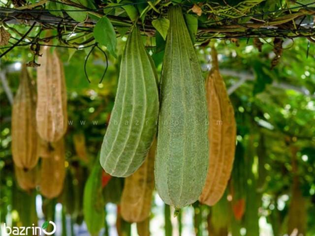 بذر لوفا چینی (خوراکی)
