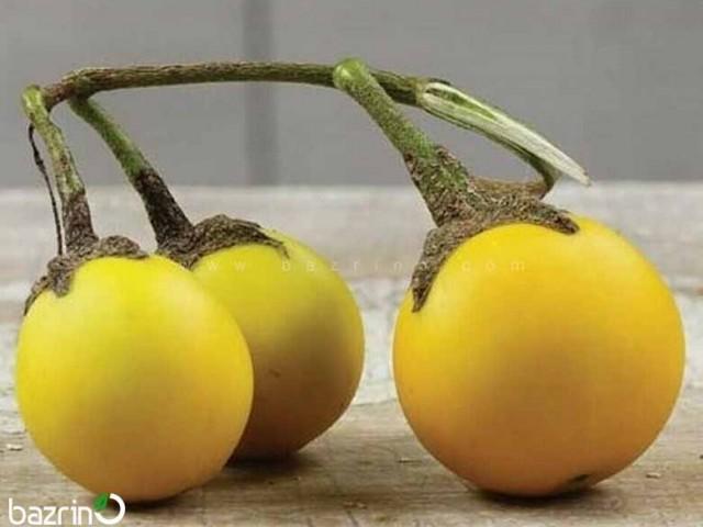 بذر بادمجان زرد مینیاتوری