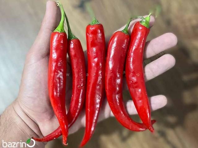 بذر فلفل قلمی تند قرمز آمازون