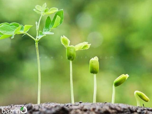 کود کامل رشد 20 20 20  ( 1 کیلوگرمی )