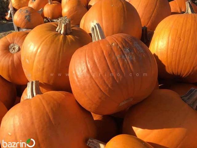 بذر کدو هالووین