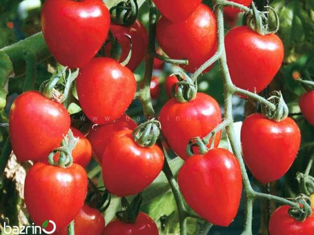 بذر گوجه چری قلبی قرمز