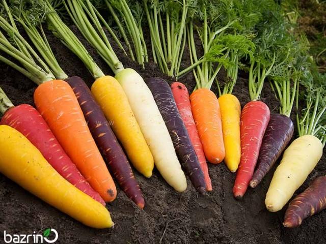 بذر هویج میکس