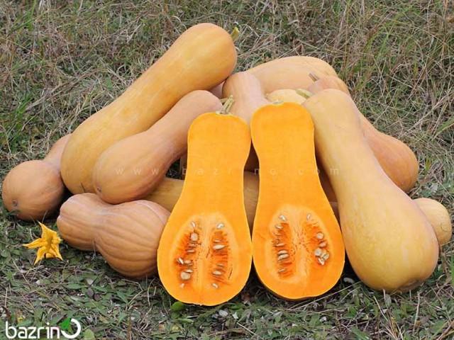 بذر کدو حلوایی نارنجی