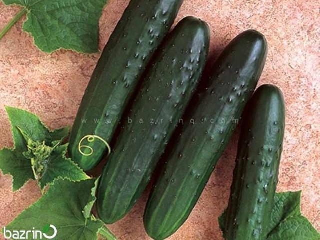 بذر خیار سبز بوته ای اصفهانی