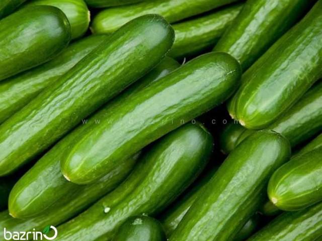 بذر خیار سبز هیبرید