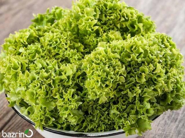 بذر کاهو فر سبز