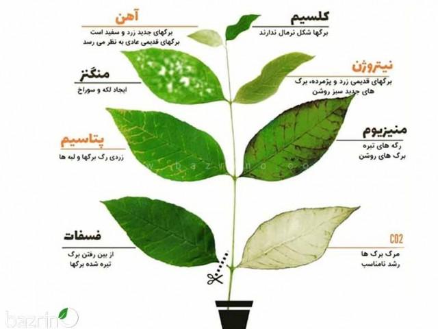 کود ریز مغذی گیاهان
