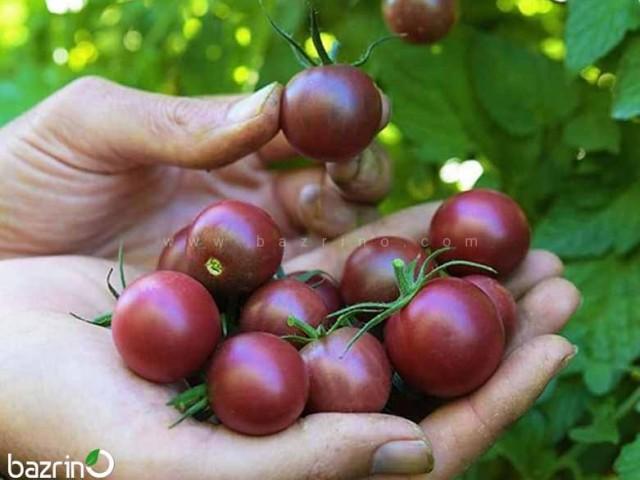 بذر گوجه چری خرمایی درختی