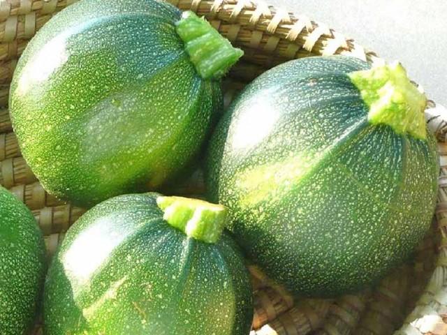 بذر کدو خورشتی گرد سبز