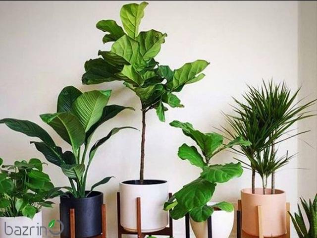 پک بذر گل و گیاهان آپارتمانی