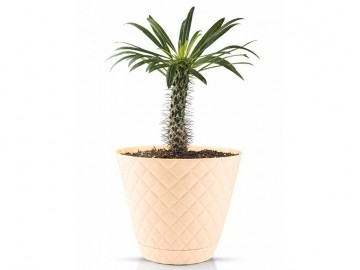 گلدان آناناسی سایز 5 (5 لیتری)