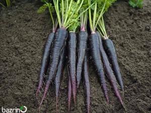 بذر هویج سیاه