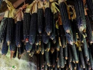بذر ذرت مشکی