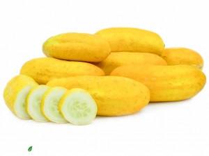 بذر خیار زرد بوته ای
