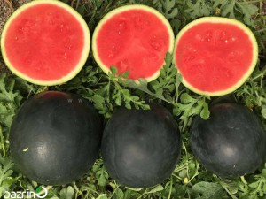 بذر هندوانه پوست مشکی