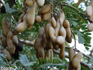 بذر تمر هندی(شیرین)