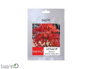 بذر افرا روبروم قرمز