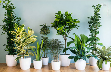 شرایط رشد و نگهداری گیاهان آپارتمانی