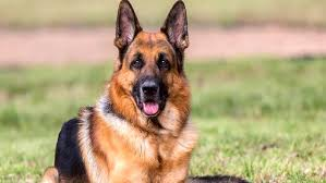 اختلالات تغذیه ای در سگها