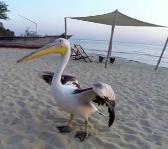 ویدئو :  این مرد به حیوان خانگی عجیبش ماهیگیری یاد میدهد
