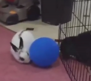 ويديو از چندتا خرگوش بامزه