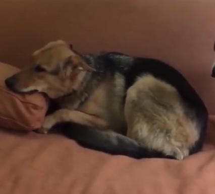 ویدئو :  وقتی حیوانات رو دعوا می کنی