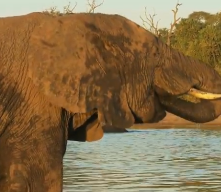 ویدئو :   ۱۸ حقیقت باورنکردنی درباره فیل ها