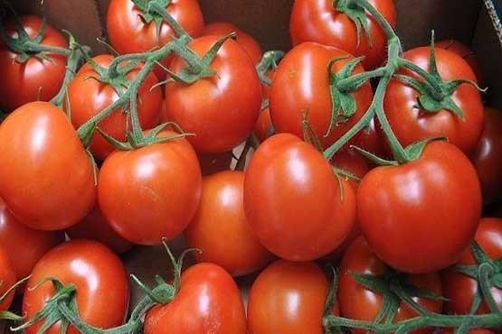 پیشگیری از بازگشت سنگ کلیه با مصرف «خربزه» و «گوجه فرنگی»
