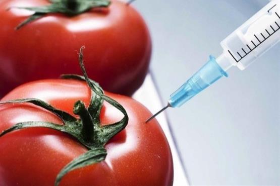 واردات و مصرف محصولات تراریخته «نسل کشی» است