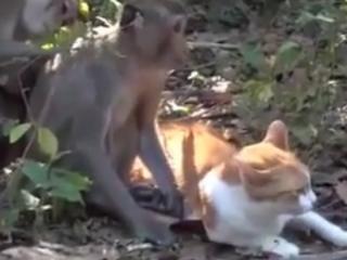 ویدئو :   دوستی خنده دار میمونها و گربه ها