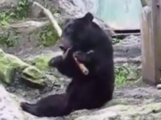 ویدئو :  خرس کونگ فو کار واقعی