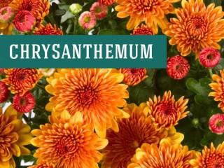 بهترین انواع گل های آپارتمانی برای خانه شما