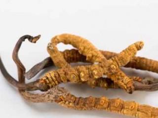 سر چخماقی و بررسی 5 مورد از فواید مصرف این قارچ