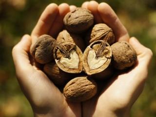 فایده گردو برای نوزادان، افراد دیابتی و زنان باردار