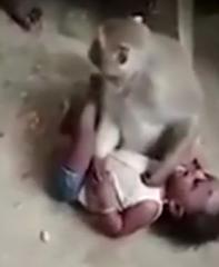 ویدئو :   حمله وحشیانه میمون برای سرقت کودک و مبارزه با روستائیان