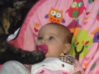 ویدئو :  گلچین خنده دارترین کارهای عجیب غریب گربه ها 2018