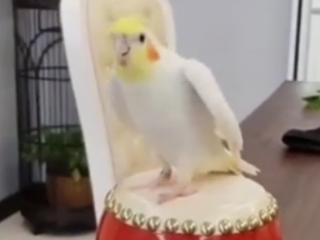 ویدئو :  فقط به دلبری های این طوطی ها نگاه کنید!