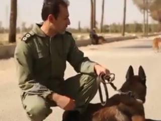 ویدئو :   سگ های پلیس ایران