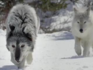 ویدئو :  شکار لحظه از شکار حیوانات وحشی