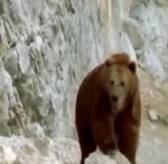 ویدئو:    جنگ خرس مادر با سگها