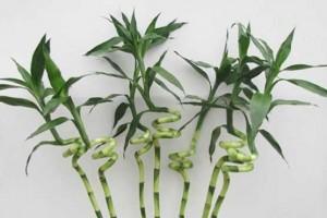 گیاهانی که از عوارض آلودگی هوا درون خانهها میکاهند